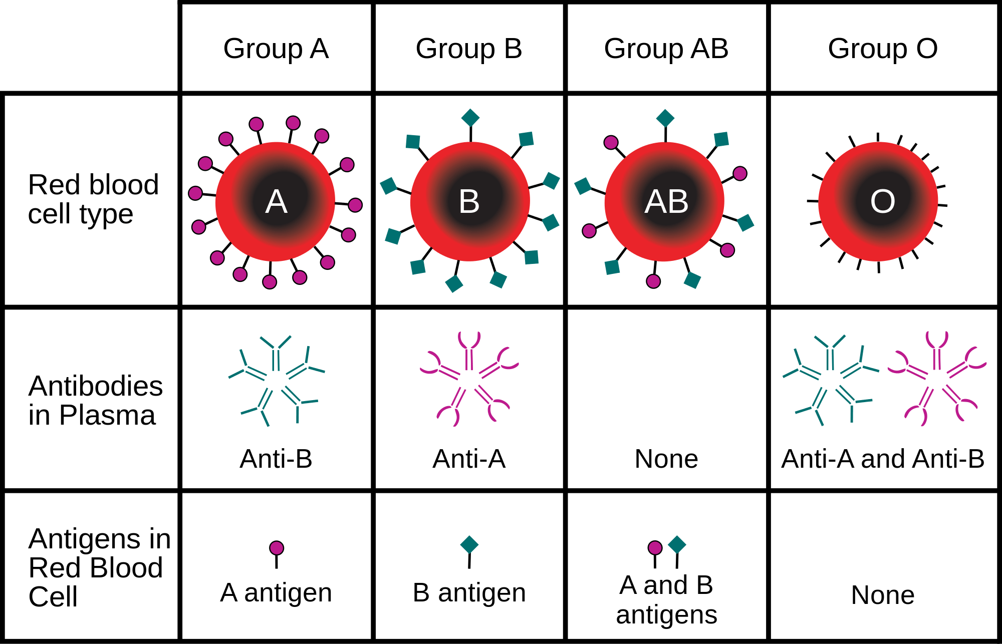 Blood group reflects personality
